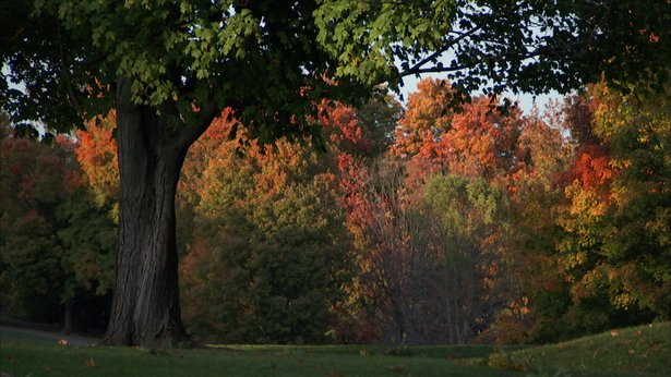 Louisville Olmsted Parks Conservancy