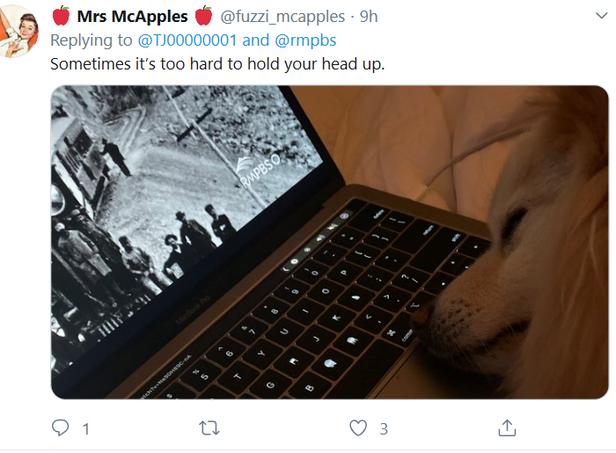 dog tweet 2.PNG