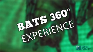 bats 360.jpg