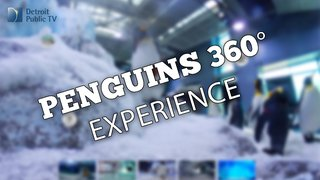 penguins 360.jpg