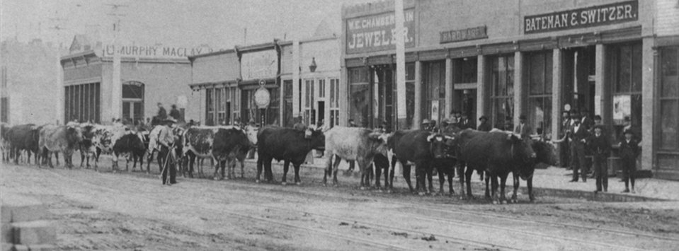 Central Ave in Great Falls 1895.  The dirt covered Central Avenue in Great Falls was a good place to drive cattle through town.