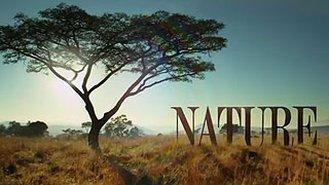 programs_nature.jpg