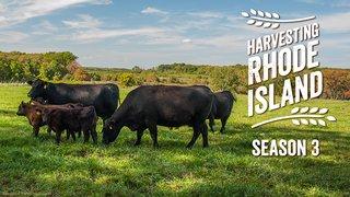 Harvesting Rhode Island