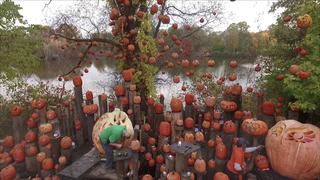 Pumpkin being carved