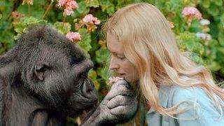 Koko-The Gorilla Who Talks
