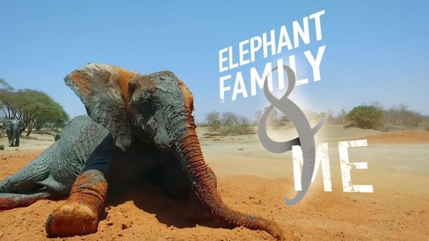 Elephant Family and Me